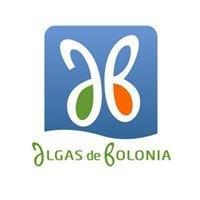 Algas de Bolonia