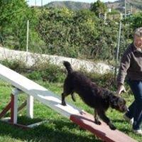 Coin Dog Training