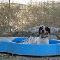 A New Day Spain (Dog Refuge)
