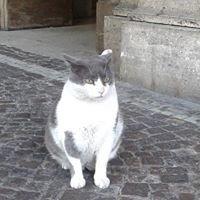 Umbertino Il Gatto