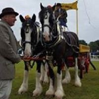 N & J Heavy Horses