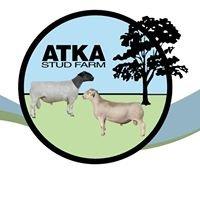 Atka Dorper & White Dorper Stud