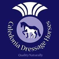Caledonia Dressage Horses