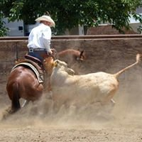 Tommy Thompson Cow Horses