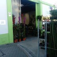 Comercializadora de Plantas el Pino