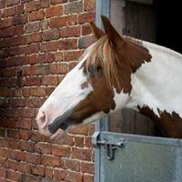 Border Counties Equestrian