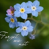 Forget-Me-Not Cards, Switzerland