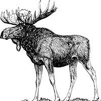 Spencer Moose Lodge