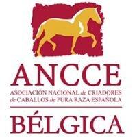 ANCCE-Bélgica