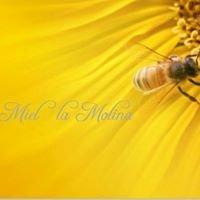 """Miel de Flores """"La Molina"""""""