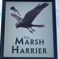The Marsh Harrier