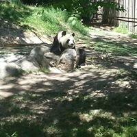 Zoologico De Madrid