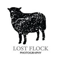 Lost Flock Photo