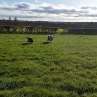 Mucky Paws Kennels and Cattery