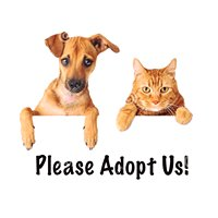 Cutler Bay Animal Clinic Adoptions