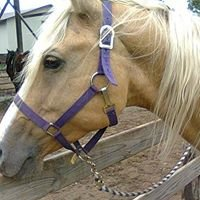 The Buffalo Ranch Horseback Riding