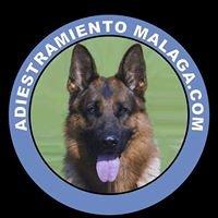 Adiestramiento canino malaga