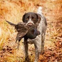 Bullseye Pheasant and Duck Hunting