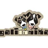Gali Pet-shop Ljubljana
