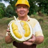 Fook Gor Durian Farm (福哥榴莲农场)