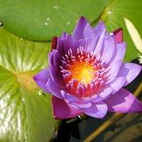 Ohana Acupuncture & Herbs