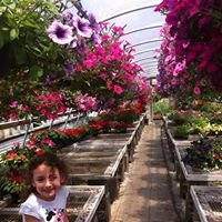 Ferrara's Greenhouse