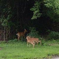 Jim Sutch & Sons Deer Processing