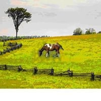 Mending Fences Animal Wellness
