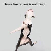 Southern Dance Precision