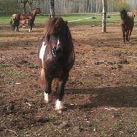 Centre equestre les cavaliers de la vezere