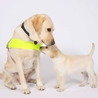 Guide Dogs Community Fundraising Team