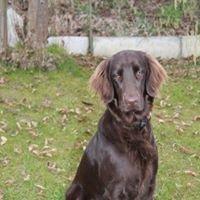 Blindenführhundschule Claudia Köhlein