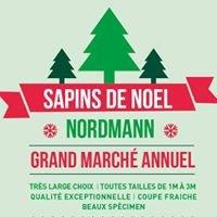 Sapins de Noël - Colmar&Alsace