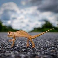 Naoki Takyo Photography - Total Image Solutions Studio