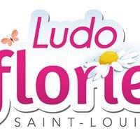 Vitrines de Saint-Louis et Environs