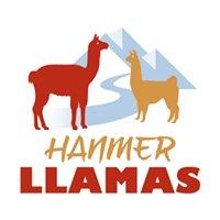 Hanmer Llamas