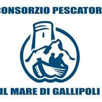 Consorzio Pescatori Gallipoli.