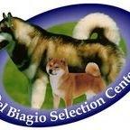 """Centro Selezione """"Del Biagio"""" - Alaskan Malamute & Shiba"""