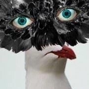 Le Goéland Masqué