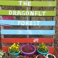 The Dragonfly Forest