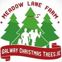 Galway Christmas Trees
