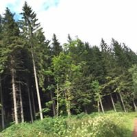 Blairadam Forest