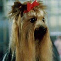 Toilettage canin-Beauté service