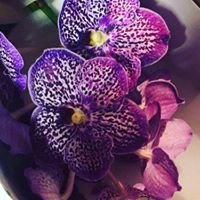 Au Palais Des Fleurs - Artisan Fleuriste