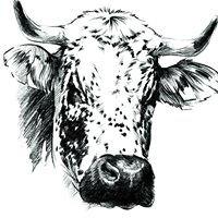 Organisme de Sélection de la race bovine Vosgienne