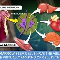 Therapy Stem Cell
