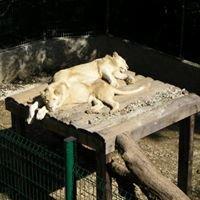 Parc Animalier De Bouillon