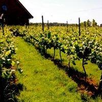 Wijngoed Zilver Cruys - Wijngaard op het Front