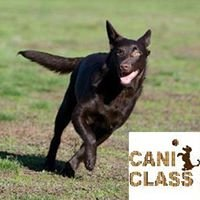 CANI CLASS, Education Canine et Comportement