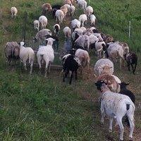 Moore Family Farm